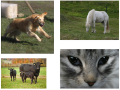 Patchwork animaux2.png